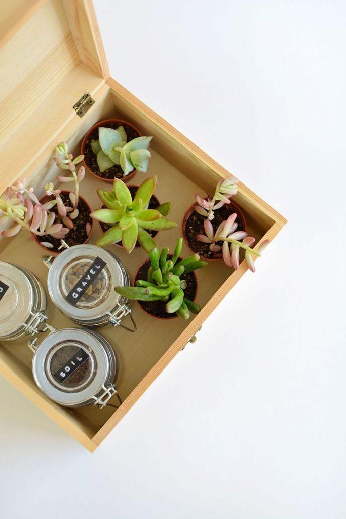 DIY gift box succulent-box